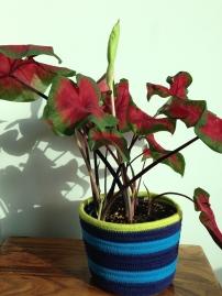 ~ New plant & Fabric pot ~