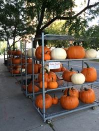 ~ Pumpkin Season ~